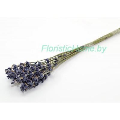 ЛАВАНДА Сухоцвет средняя, , 17-20 штук в пучке , дымчато-синий
