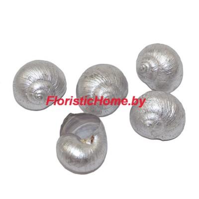 ДЕКОР  Ракушка окрашенная 5 шт., природный материал, d 2,5-3 см, серебро,