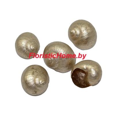 ДЕКОР  Ракушка окрашенная 5 шт., природный материал, d 2,5-3 см, золотисто-песочный,