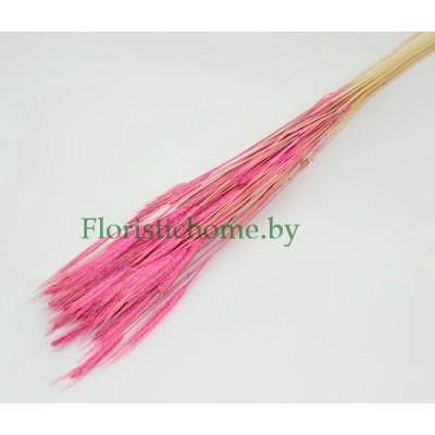 ЗЛАКИ Колосок пшеницы, 10 шт. в пучке, розовый