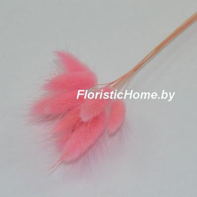 ЛАГУРУС 10 штук в пучке , , светло-розовый