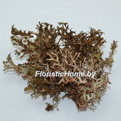МОХ сухой , дизайн №2, 7-10 гр., коричнево-серый